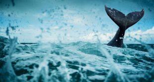 Cara Nabi Yunus Terbebas dari Segala Kesulitan Akibat 'Lockdown'
